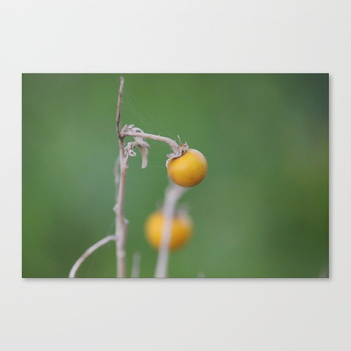 Gentle Touch Canvas Print