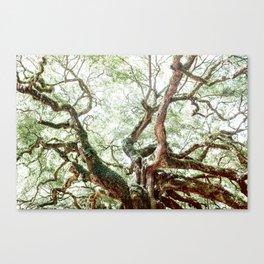 Angel Oak Tree Canvas Print