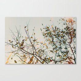 Gold & Warm Canvas Print