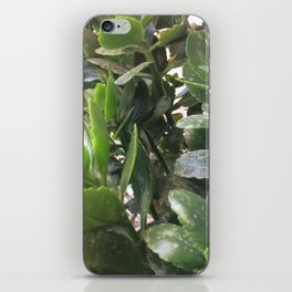 Leaves  #society6 #printart #decor #buyart iPhone Skin