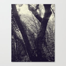 Italian forest Canvas Print
