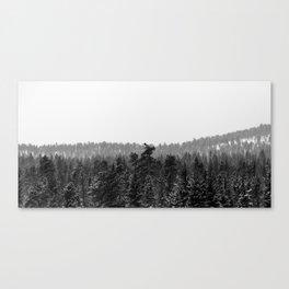 Colorado Winter Trees Canvas Print