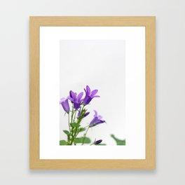 PURPLE FLOWERS - Bellflowers #1 #decor #art #society6 Framed Art Print