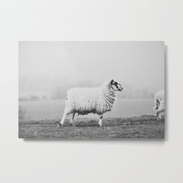 SHEEP II Metal Print