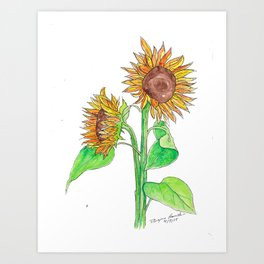 Sunflowers 2 Art Print