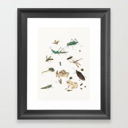 Insects, frogs and a snail Framed Art Print