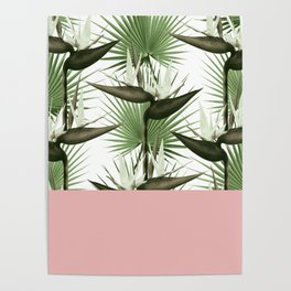 Strelitzia Tropical Rose Poster