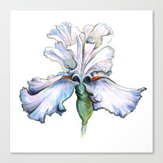 Light Iris Canvas Print