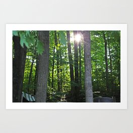 Forest Light Art Print