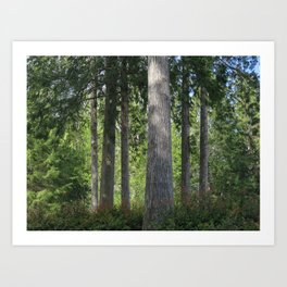 Pointe Trees 11 Art Print