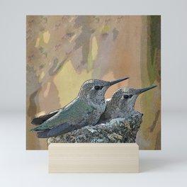 Pair of Anna's Hummingbird Fledglings Mini Art Print