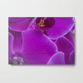 Macro Violet Orchid Metal Print