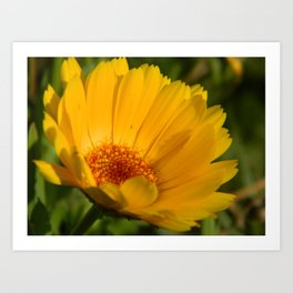 Yellow Daisy Flower Art Print