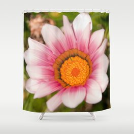 Southern African White ❁ Purple Gazania Flower Shower Curtain