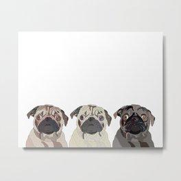 Triple Pugs Metal Print