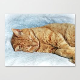 Sleepy Kitty Canvas Print