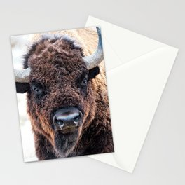 American Bison  -  A Living National Treasure Stationery Cards