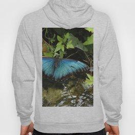 Blue Morpho Butterfly 2 Hoody
