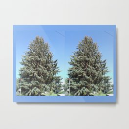 Colorado Blue Spruce, front yard, doubled Metal Print