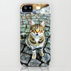 Alley Cat iPhone (5, 5s) Slim Case