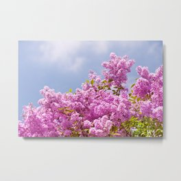 Lilac vibrant pink bunches Metal Print