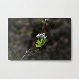 White Berries Metal Print