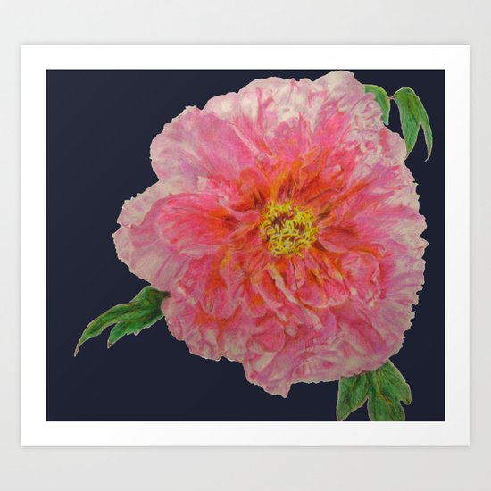 Pink Peony Flower Drawing on Blue Background Art Print
