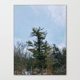 Lonely tree in the forest Canvas Print