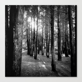 between the uprights Canvas Print