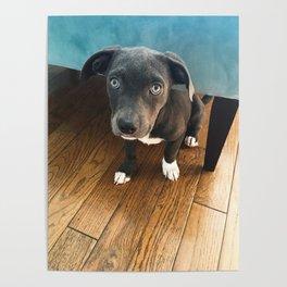 Puppy Luna Love Poster