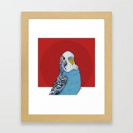 FEATHER FEST - BUDGIE Framed Art Print