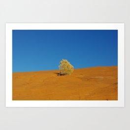 Lonely plant on orange rock plateau under blue sky Art Print