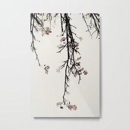 Delicate like snow Metal Print
