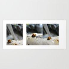 ladybug big Art Print