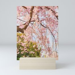Cherry pink blossoms watercolor painting #14 Mini Art Print