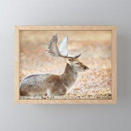Portrait of a Fallow deer Framed Mini Art Print