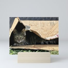 Sad Box Kitty (Lanai Cat's Sanctuary) Mini Art Print