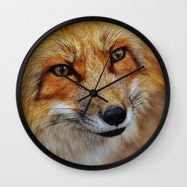 wild fox close up Wall Clock