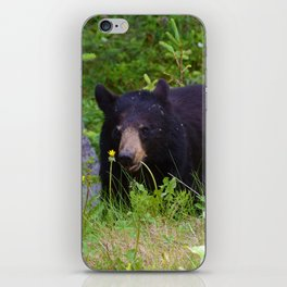 Black bear munches on some dandelions in Jasper National Park iPhone Skin