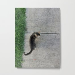 Sidewalk cat  Metal Print