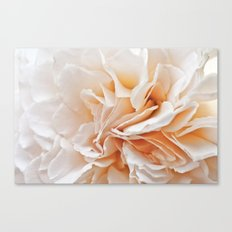 Old Style Rose Flower 3464 Canvas Print