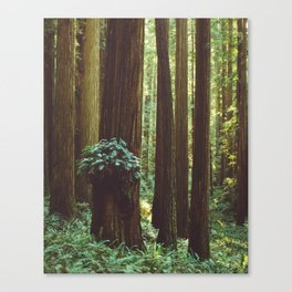 Fern Gully Canvas Print