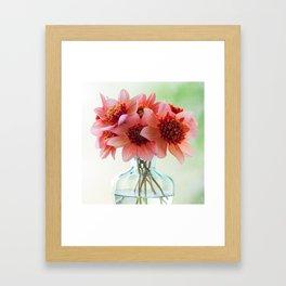 Dahlias in a clear glass vase Framed Art Print