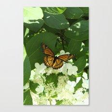 Butterfly in Hydrangea Canvas Print
