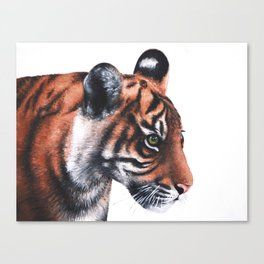 Sumatran Tiger Cub Canvas Print