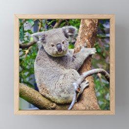 Australian Koala Bear Photo Framed Mini Art Print
