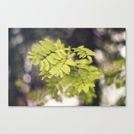 Late Summer Leaves Canvas Print
