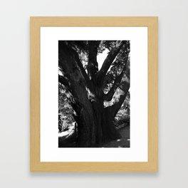 Black and white big old tree Framed Art Print