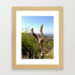 Brown 3 Leaf Weed Framed Art Print