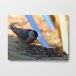 Chickadee lunchtime Metal Print